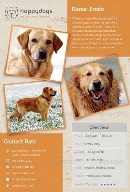 Lost Pet Poster Template  Pet Poster